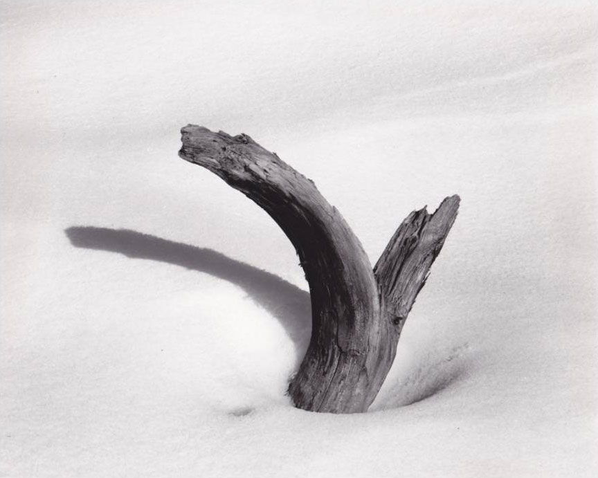dead tree in snow photograph